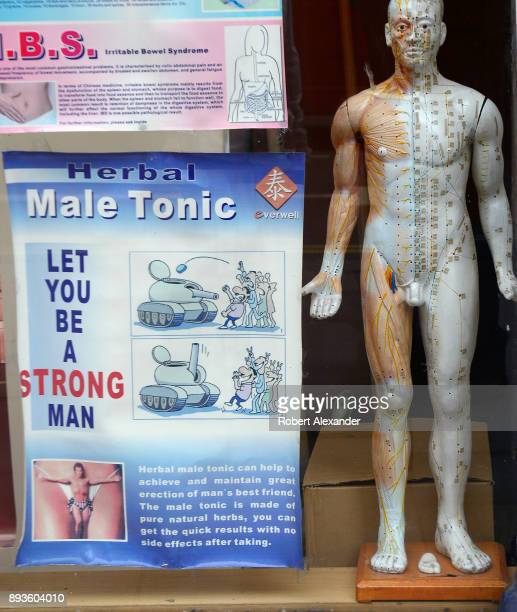 The window of a Chinese herbal medicine shop in London England features an acupuncture display model and poster promoting a herbal male tonic which...