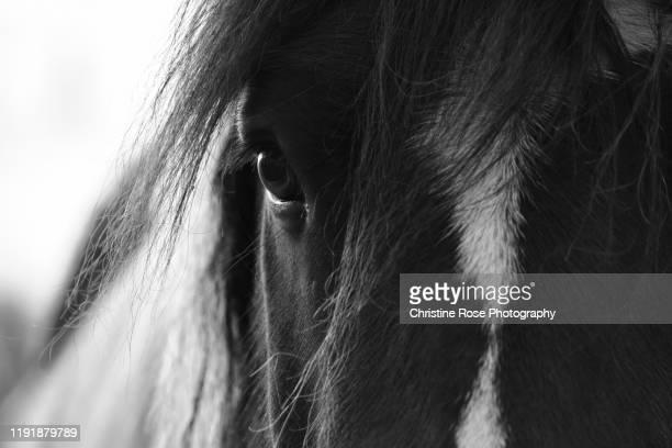 25 ++ かっこいい 馬 画像 422593-馬 画像 かっこいい