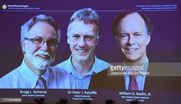 The winners of the 2019 Nobel Prize in Physiology or Medicine Gregg Semenza of the US Peter Ratcliffe of Britain and William Kaelin of the US appear...