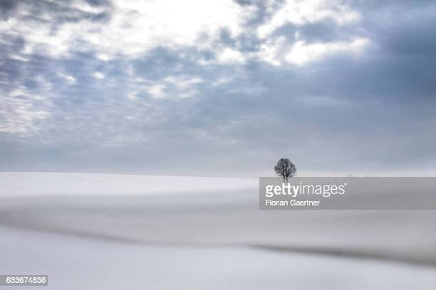 The winter landscape with a lonely tree on a field is pictured on February 03 2017 in Markersdorf Germany