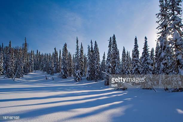 冬の動機 12 - シベリア ストックフォトと画像