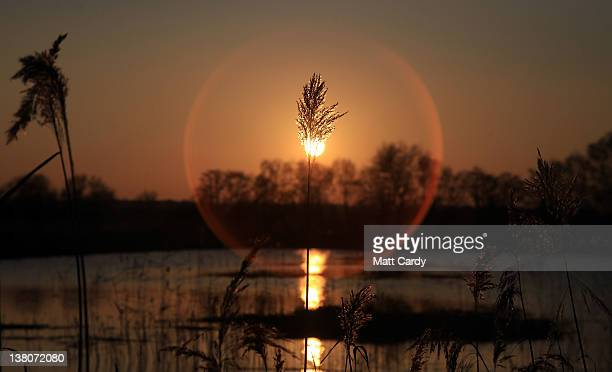 The winter sun sets over Shapwick Heath a wetland reserve, on February 1, 2012 near Glastonbury, England. Shapwick Heath National Nature Reserve is a...