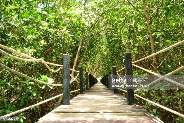the wood bridge. the wood bridge is walkway, it  will take our to mangrove forest. - バージニア州ウッドブリッジ ストックフォトと画像