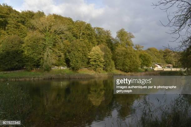 The woodland under sunbeam reflecting in 'Petit Etang du Lange Gracht'