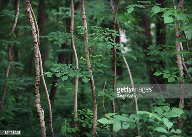 the woods - fairfax county virginia stock photos and pictures