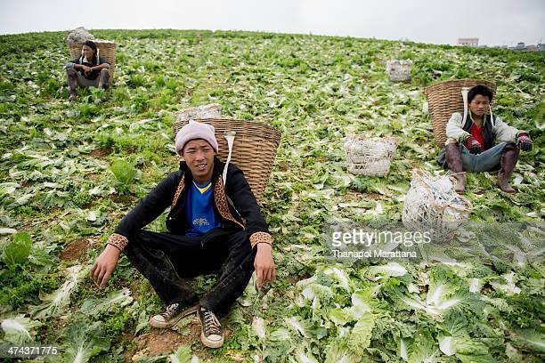 The workers have a rest after lettuce collecting at Phu Hin Rong Kla National Park, Thailand