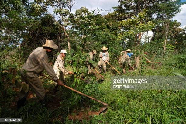 The workers in the Atlantia Forest are photographed for Paris Match in the nature reserve of Sebastiao and Lelia Salgado on April 12, 2019 in Minas...
