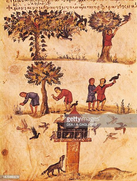 The world of birds miniature from De Venatione Greek treatise on hunting manuscript 11th Century