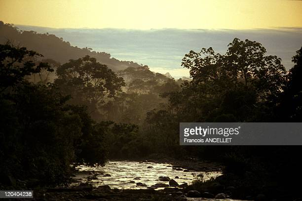The world of Jivaro Indians in Ecuador in 1992 At the source of the Rio Pastaza High Amazonia Ecuadorian Amazon
