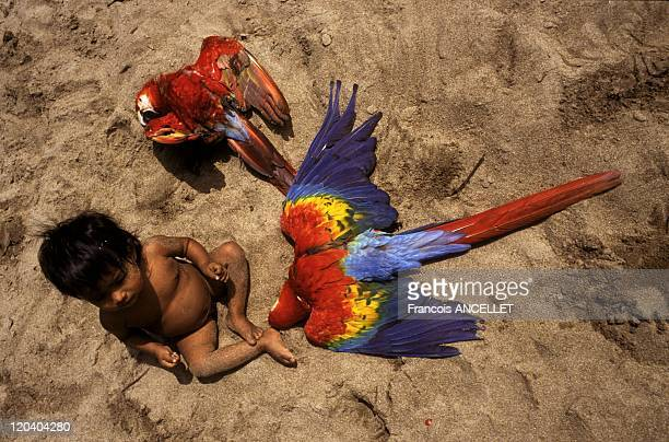 The world of Jivaro Indians in Ecuador in 1992 Child and dead parrots Rio Pindoyacu Achuar ethnic group
