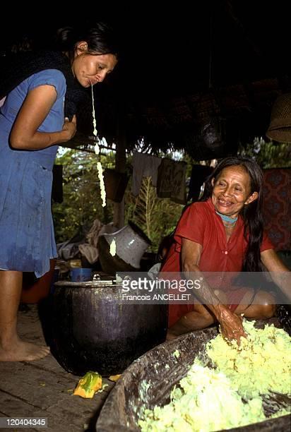 The world of Jivaro Indians in Ecuador in 1992 Jivaro Indian making the Chicha beer from manioc Saliva for the fermentation Rio Conambo Zaparo ethnic...