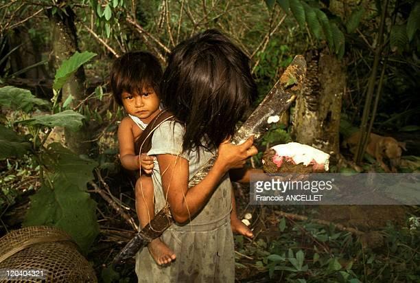 The world of Jivaro Indians in Ecuador in 1993 Achuar children harvesting the Yucca manioc tubers Rio Pindoyacu Ecuadorian Amazon
