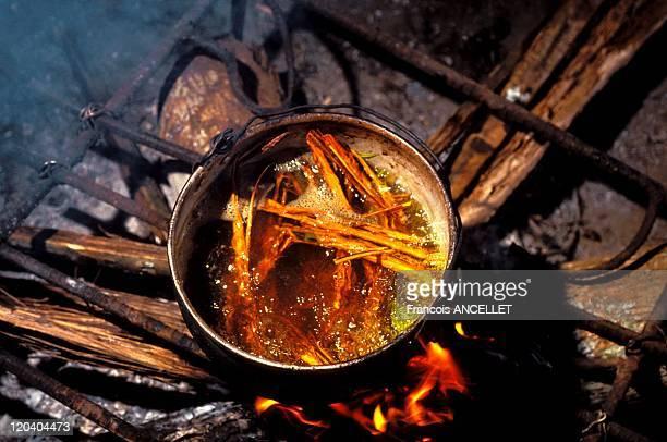 The world of Jivaro Indians in Ecuador in 1993 Cooking plants to get Hayahuasca a powerful hallucinogen Ecuadorian Amazon
