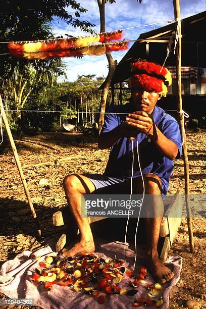 The world of Jivaro Indians in Ecuador in 1993 Jivaro Indian from the Achuar ethnic group making a crown out of parrot feathers