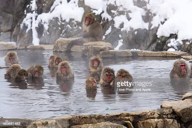 The world of Snow Monkey