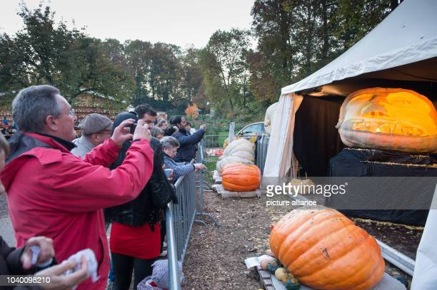 The world's biggest pumpkin is exhibited at the pumpkin exhibition in Ludwigsburg Germany 30 October 2016 The pumpkin weighing 11905 kilogramm was...