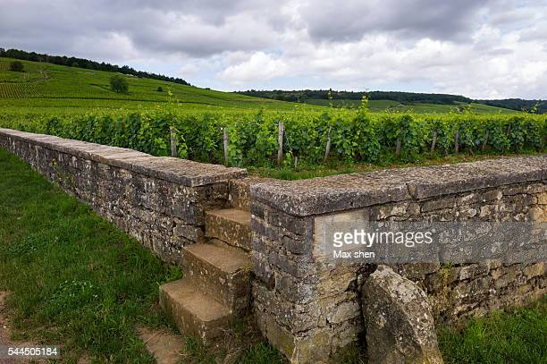 The world's famous Romanee conti vineyard in Burgundy, France.