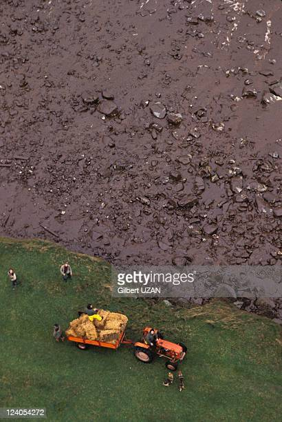 The wreck of the Amoco Cadiz in France on March 23 1978 Cleaning up the coast