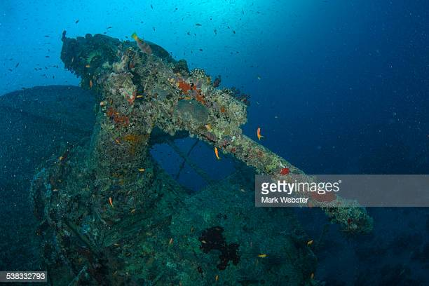 the wreck of the thistlegorm - the webster stock pictures, royalty-free photos & images
