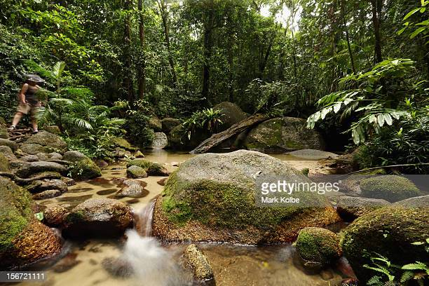 The Wurrmbu Creek is seen flowing through the world heritage listed daintree rainforest on November 14 2012 in Mossman Gorge Australia Located in Far...