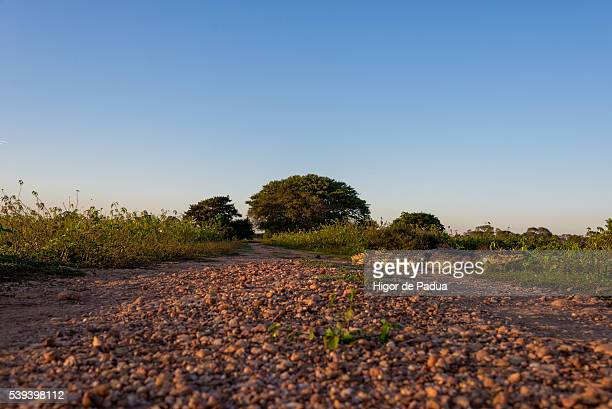 the yacare caiman stopped basking in the sun on the road dub - animal selvagem stock pictures, royalty-free photos & images