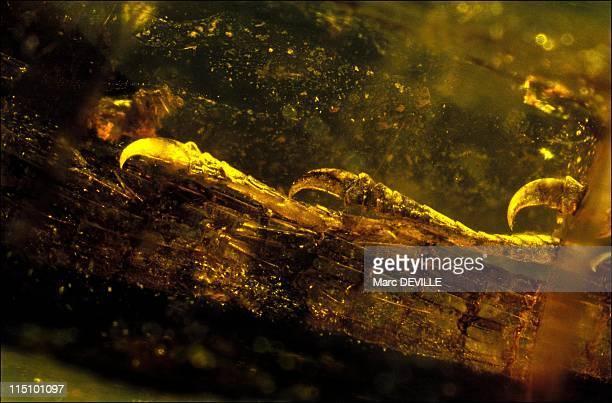 The yellow amber treasures of Lebanon in Paris France in June 2001 The most ancient true lizard Lecartidae lower Cretaceous 125 millions years BP