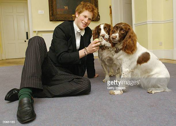 The youngest son of the Prince of Wales Prince Harry plays with Rosie and Jenny the dogs owned by Andrew Gailey the housemaster of the Manor House on...