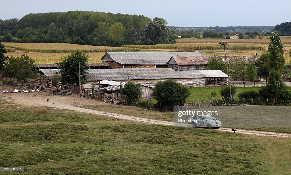The Zasavica donkey farm which produces Serbian donkey cheese, locally known as pule, sits in Zasavica, Serbia, on Wednesday, Aug. 17, 2016. Pule cheese is made from the milk of Balkan donkeys and is priced at 1100 euros per kilo and reported to be the world's most expensive cheese. Photograph: Oliver Bunic/Bloomberg via Getty Images