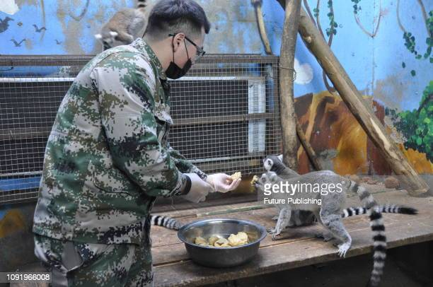 The zoo staff ate steaming dumplings and fiveflavor vegetable red buns for African ringtailed lemurs red monkeys and South American squirrel monkeys...