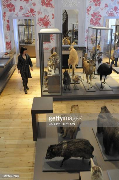 The zoology gallery of the Natural History Museum La Rochelle Charente Maritime department Poitou Charentes region France