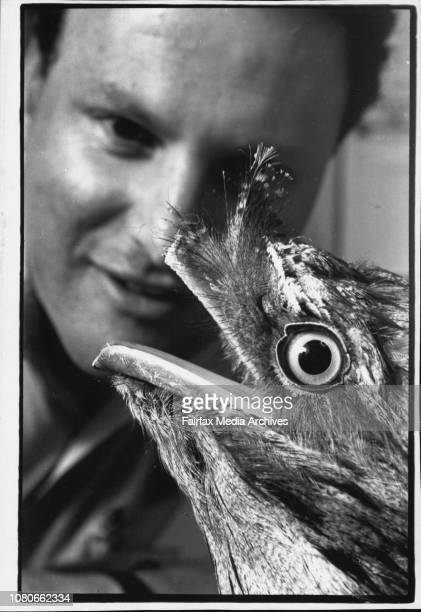 The zoo's vet Dr Larry Vogelnest prepares Beaky for the operationBeaky the tawny frogmouth was listed well down the operating list after the wallaby...