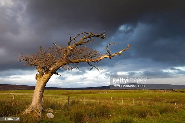 The_last_tree
