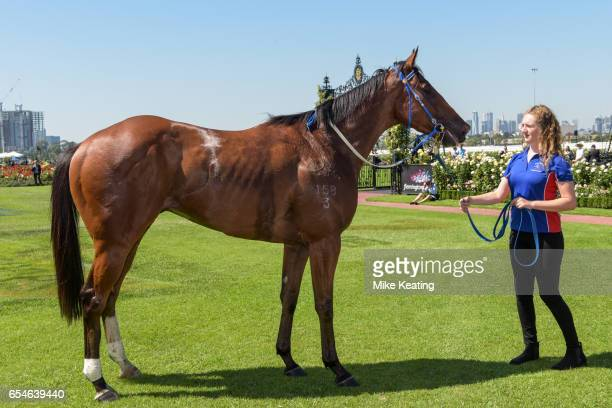 Theanswermyfriend parades in the mounting yard after winning the VRC Thanks Greg Miles Trophy at Flemington Racecourse on March 18 2017 in Flemington...