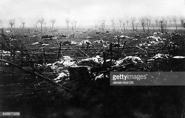 1WW Theatre of war western front 1916 Battle of the Somme JuneNov1916 Dead bodies of french soldiers not possible to recover therefore covered with...