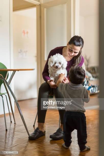 su nuevo perro adoptado - adopción bebé fotografías e imágenes de stock