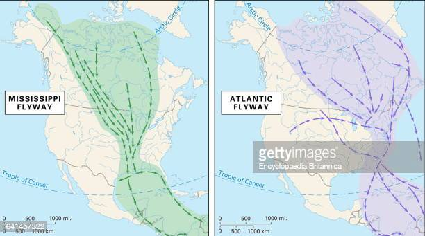 Thematic map Mississippi Atlantic flyways
