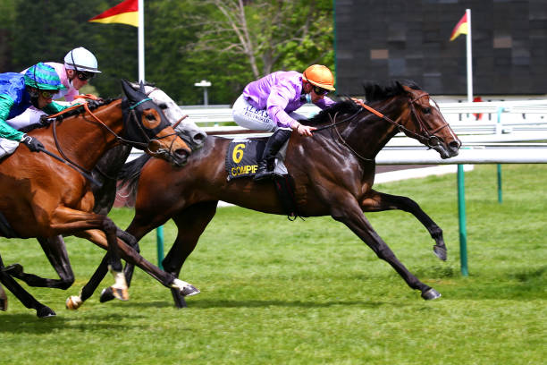 FRA: Meeting Compiegne - Horse racing