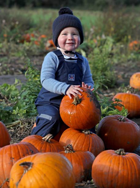 GBR: Halloween Pumpkin Picking 2020