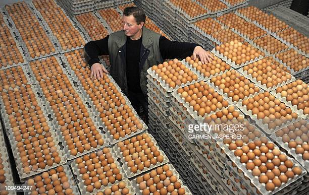 Theodor Meyer stands between packages of eggs on his chicken farm in Emstek northern Germany on January 10 2011 Meyer's farm with it's 55000 hens was...