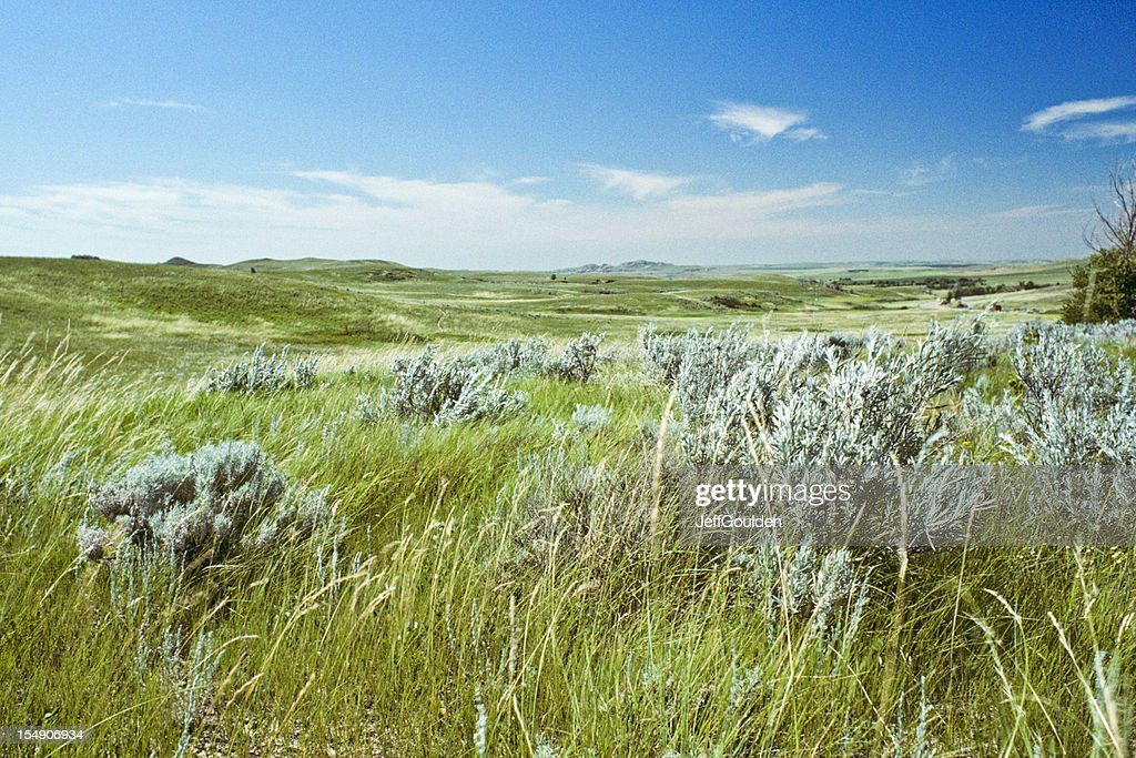 Grassland and Sagebrush : Stock Photo