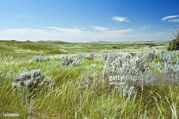 Grassland e Artemisia tridentata