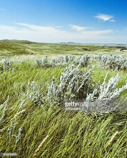 grassland and sagebrush on a sunny day - jeff goulden stock pictures, royalty-free photos & images