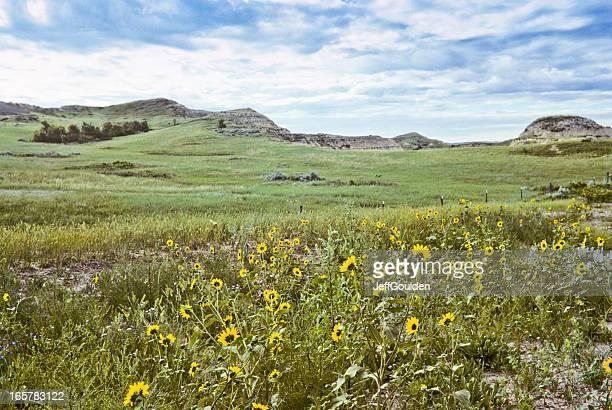 Badland prato e fiori selvatici