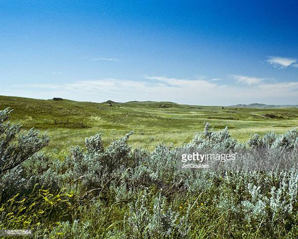 Grassland and Sagebrush