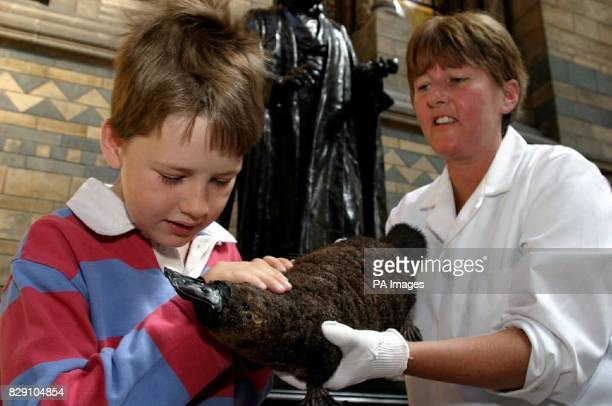 Theodore Stone is shown a duckbilled platypus by Lorraine Cornish senior conservator at the National History Museum Theodore is the great great great...