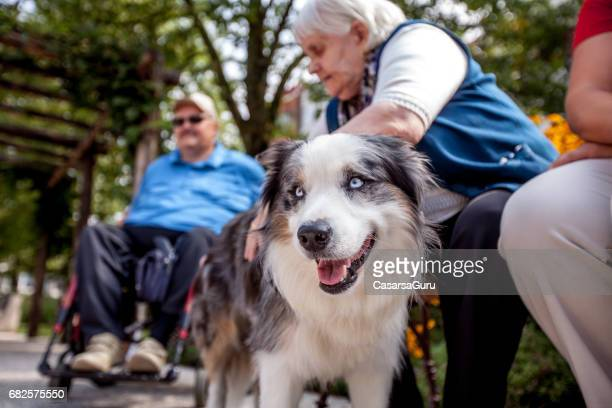 therapeutic dog among seniors in retirement community - alternative therapy stock pictures, royalty-free photos & images