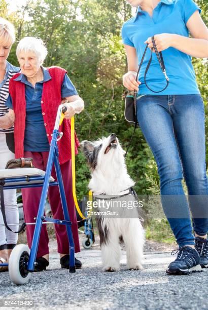 Thérapeute avec chien dressé à haute femme avec mobilité Walker d'avoir quelques minutes de marche