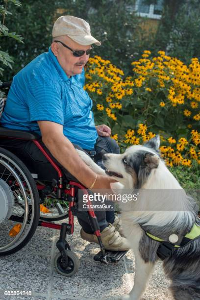 Therapy Dog Helping  Disabled Senior Man On Wheelchair
