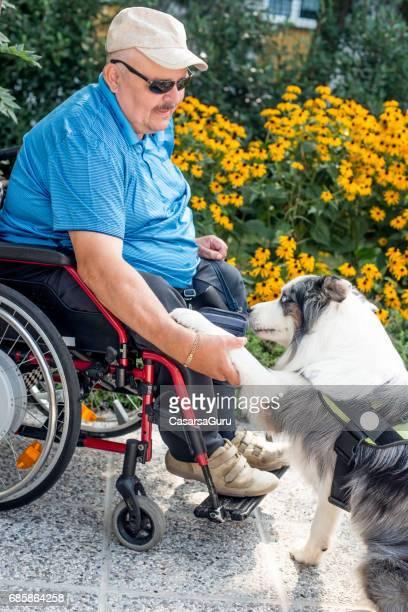 cão de terapia, ajudando o homem sênior com deficiência em cadeira de rodas - cão adestrado - fotografias e filmes do acervo