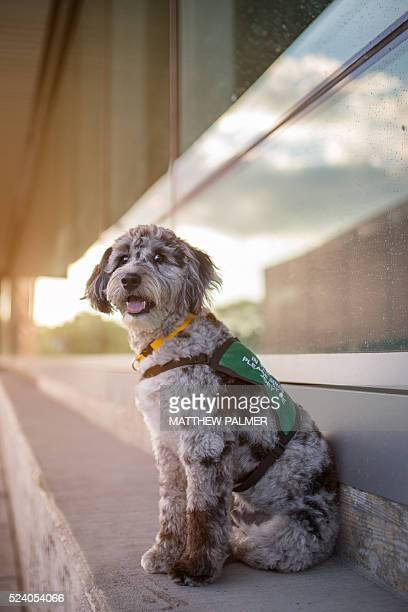 Therapy Dog on Bench